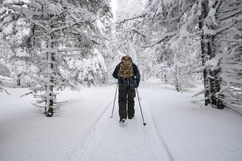Люди в лесе зимы горы покрытом снегом стоковые изображения rf