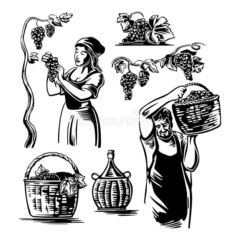 Люди и женщины жмут виноградины в винограднике иллюстрация вектора