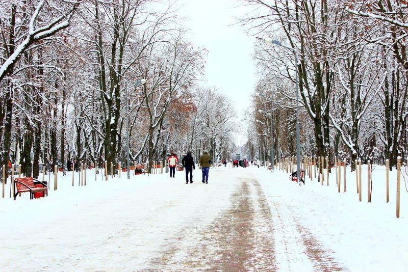 Люди идут в парк зимы с много больших деревьев и путем стоковая фотография