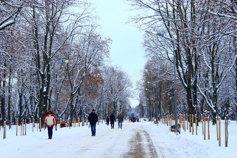 Люди идут в парк зимы с много больших деревьев и путем стоковые фотографии rf