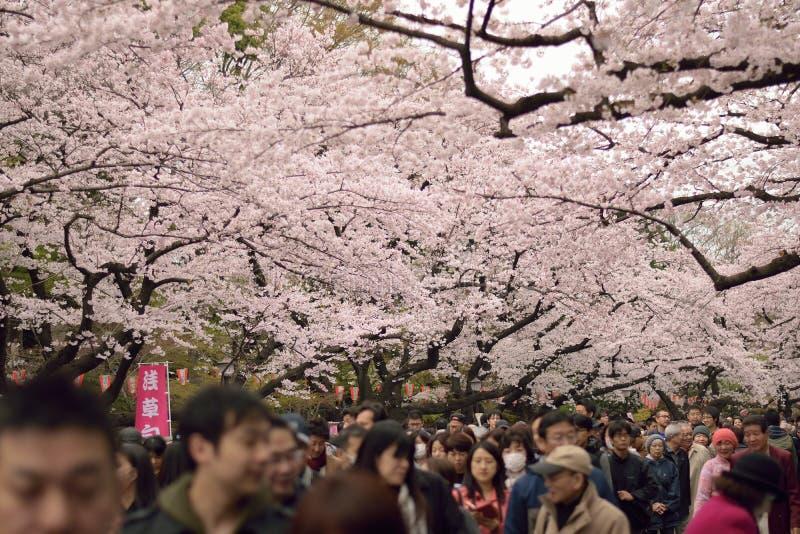 Люди наслаждаясь зацветая вишневыми цветами на парке Ueno в токио, Японии стоковая фотография