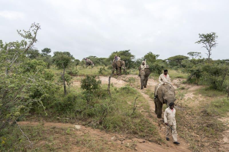 Люди на приводе слона в Африке стоковые изображения rf