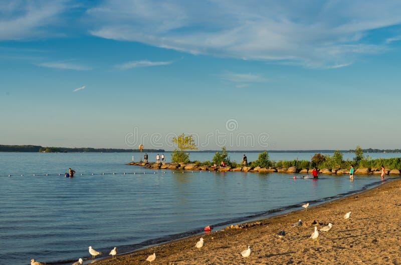 Люди на пляже стоковое изображение rf
