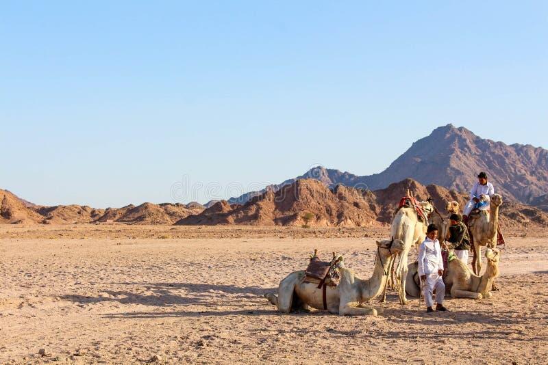 Люди племен бедуина в пустыне Синая стоковые фото