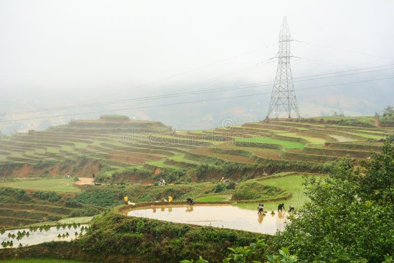 Люди работая на поле на Sapa, Вьетнаме стоковое изображение rf