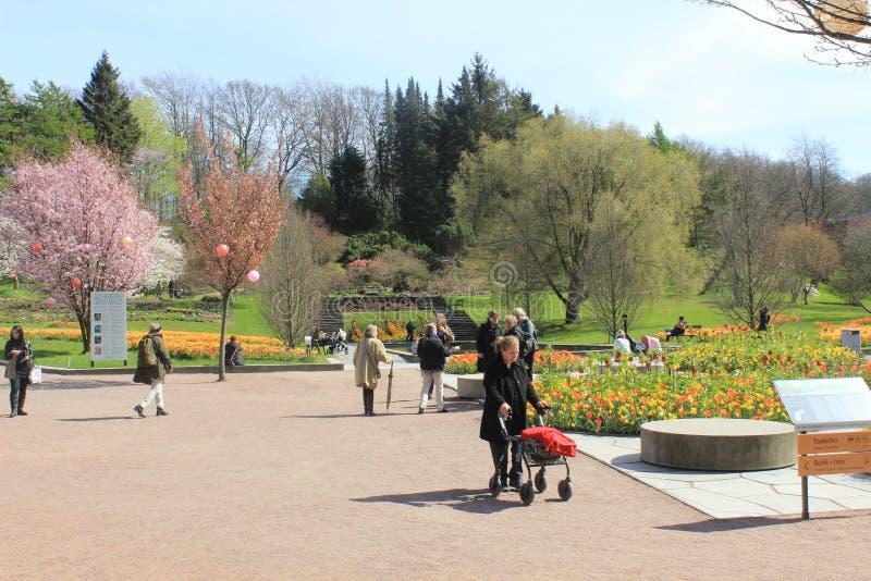Люди, цветки, деревья, весна, солнечный день, сад Гётеборга ботанический, Швеция стоковые изображения rf