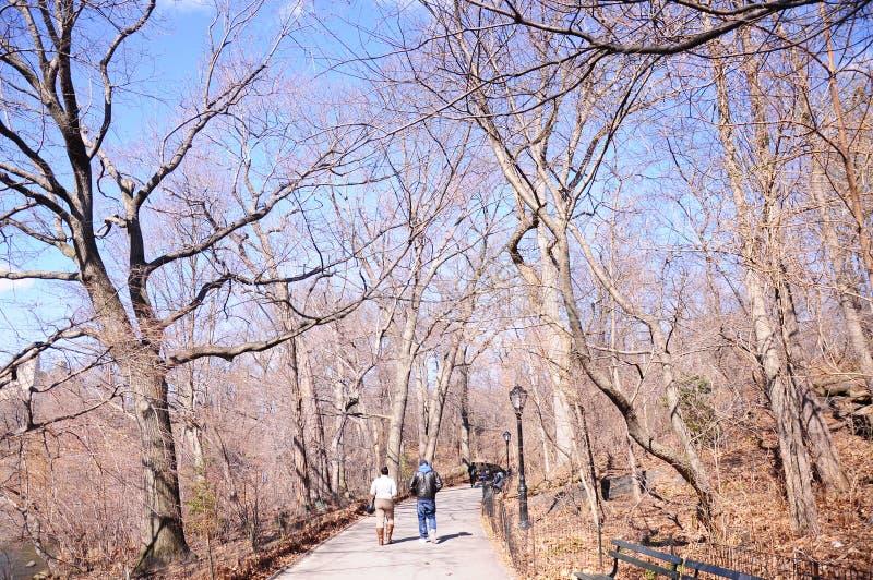 Люди jogging в Central Park Нью-Йорке США стоковая фотография