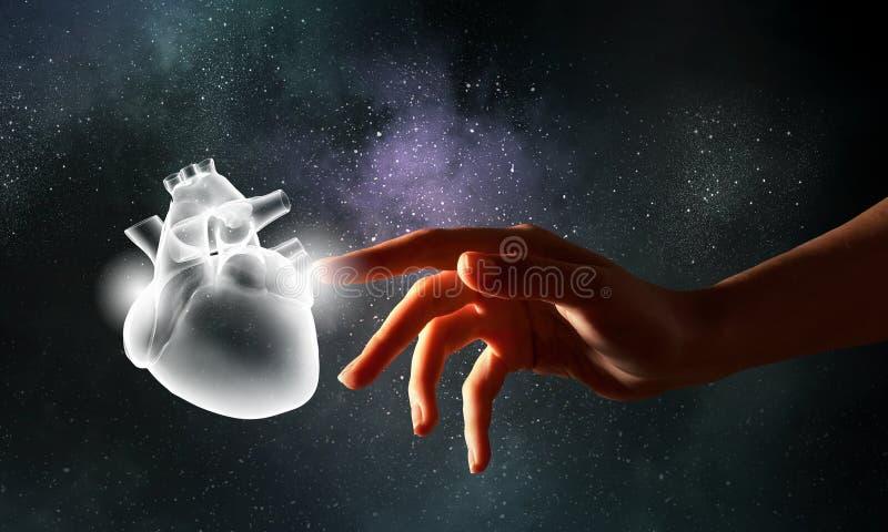 Людское здоровье сердца стоковые фотографии rf