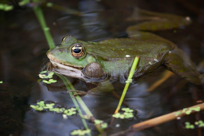 Для, картинка анимация лягушки на болоте
