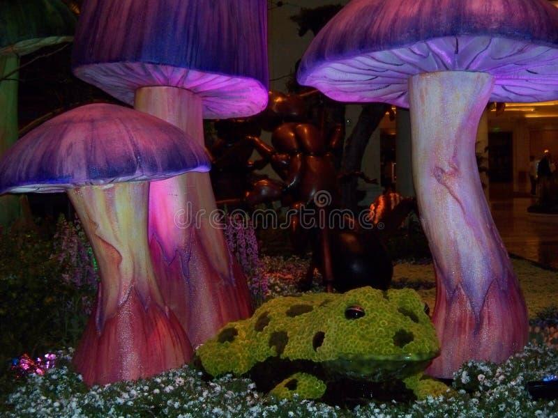 Лягушка в саде стоковые изображения rf