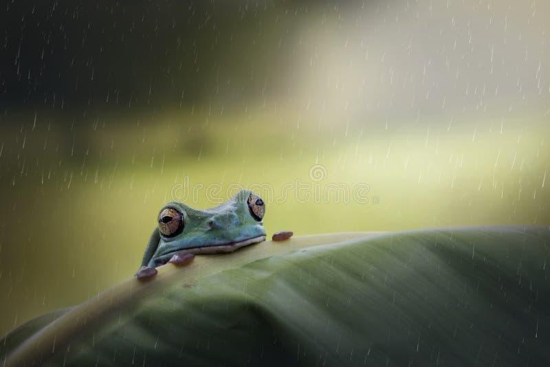 Лягушка и дождь стоковые изображения