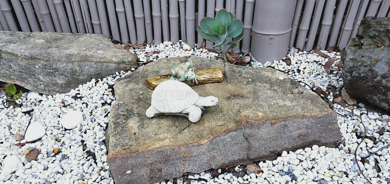 Лягушка и черепаха загорают на утесе стоковая фотография rf