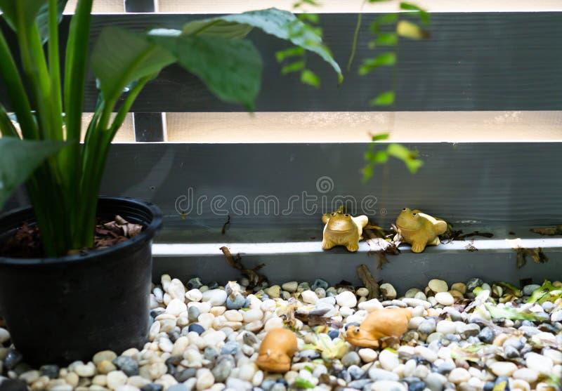 Лягушка младенца в туалете стоковые изображения rf