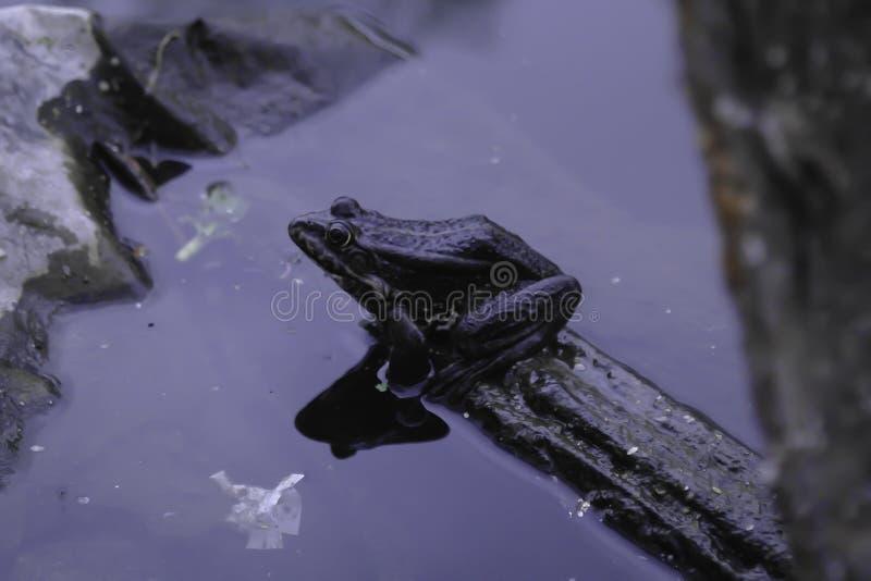 Лягушка сидит на части пластикового отхода стоковое изображение rf