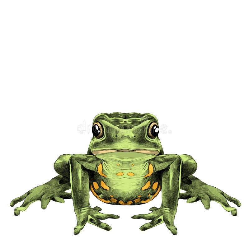 Лягушка сидит иллюстрация вектора