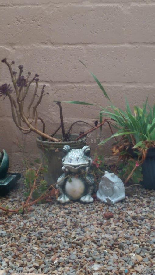Лягушка 1 стоковая фотография