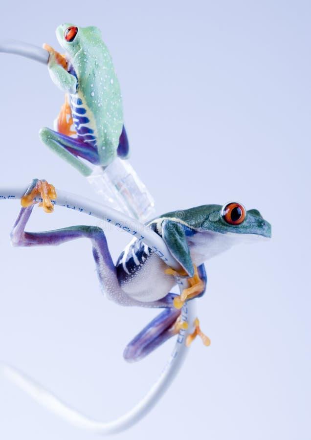 лягушка www стоковые изображения rf