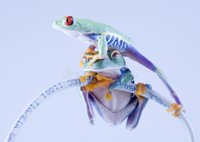 лягушка www стоковые фотографии rf