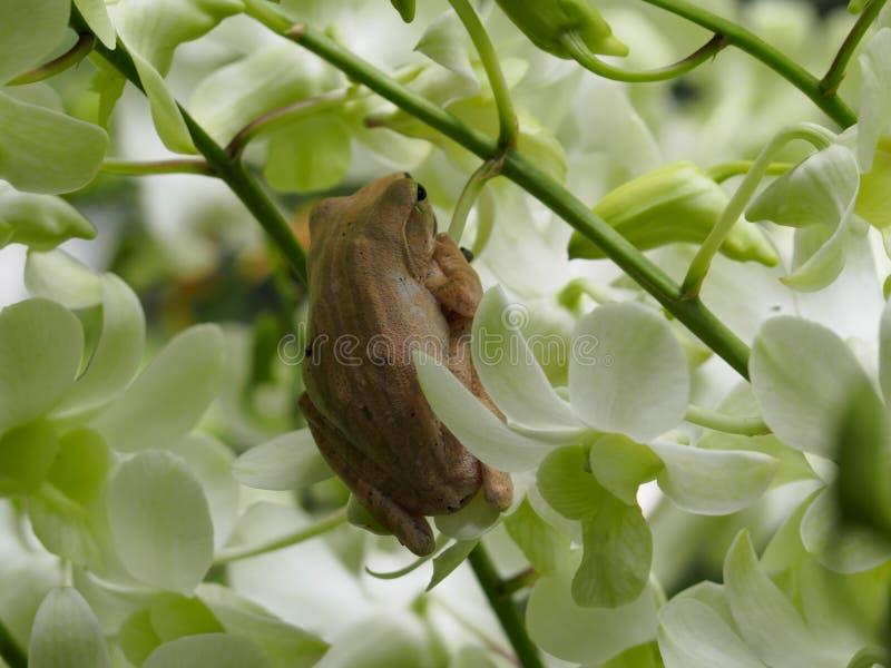 Лягушки висят стоковые фото