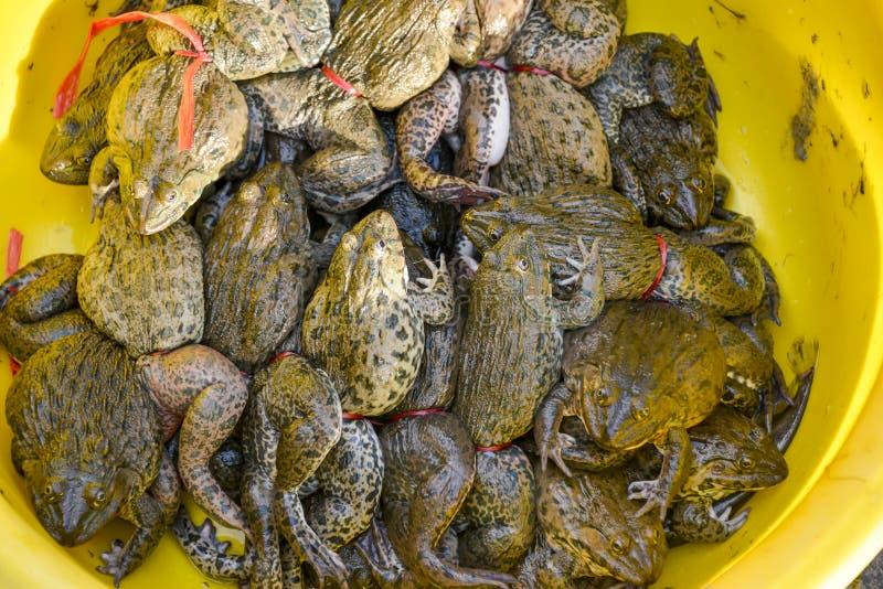 Лягушки в рынке стоковая фотография