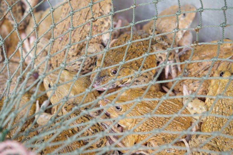 Лягушки в сети стоковое изображение