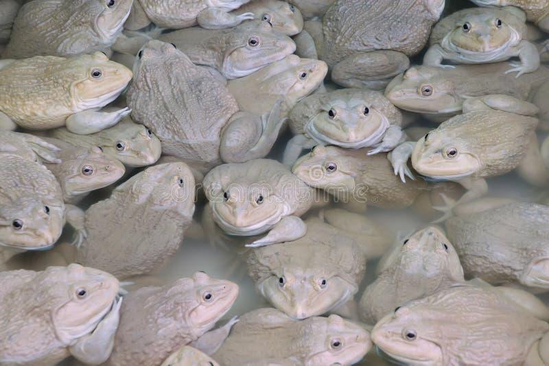 Лягушки в ферме стоковая фотография