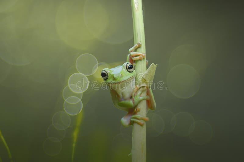Лягушки и аллигаторы приятельства II стоковая фотография rf