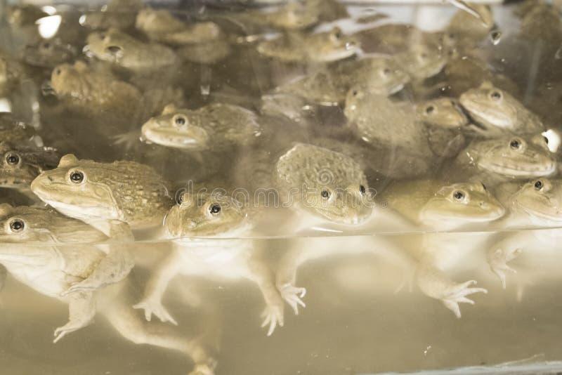 Лягушки проданные в новом рынке тайском стоковые изображения