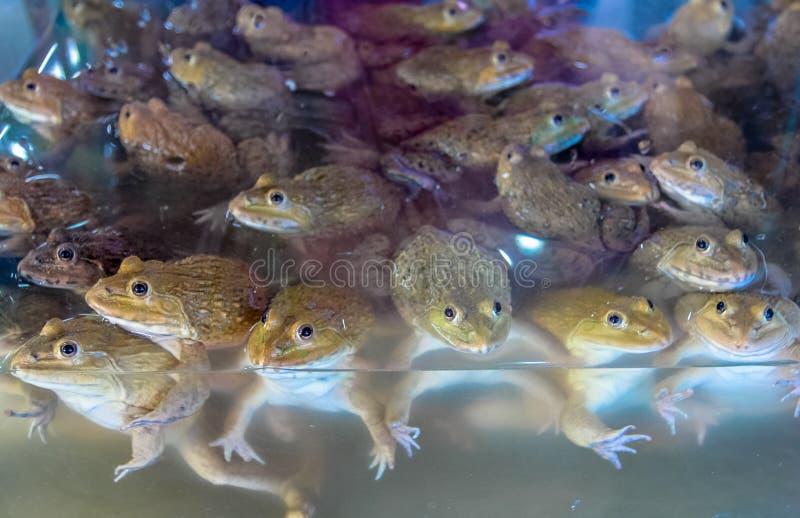Лягушки проданные в новом рынке тайском стоковое фото rf