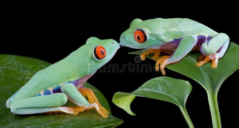 лягушки целуя вал стоковые фотографии rf