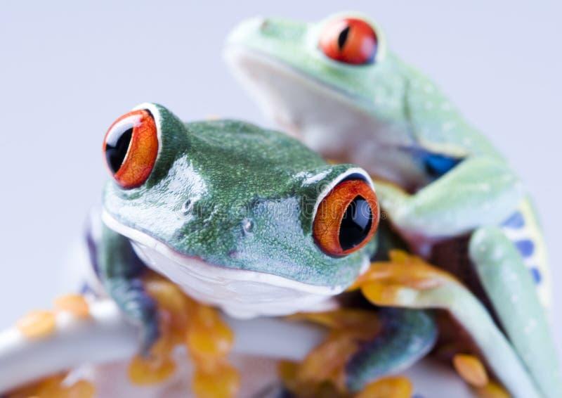 лягушки стоковые изображения