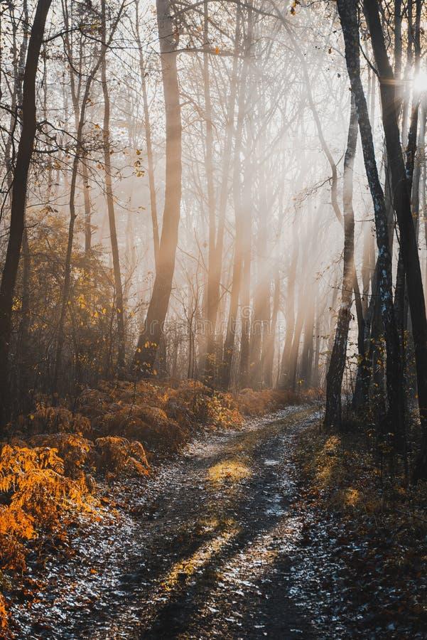 Магическое солнце в Осеновом лесу на 'Мисти Морнинг' стоковое фото rf