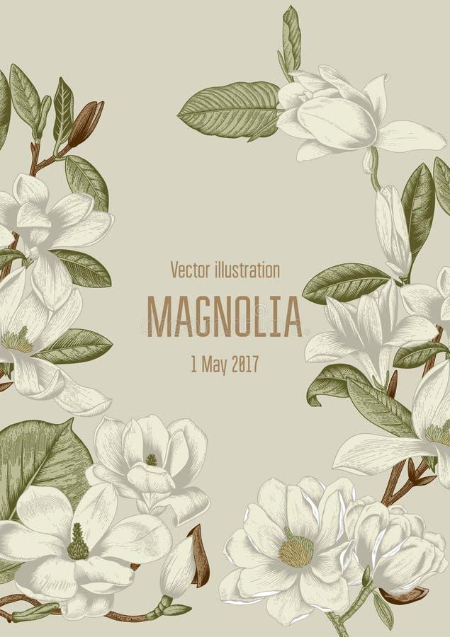 Магнолия Цветы карточка цветет приветствие ботаническую зацветая валы иллюстрация вектора