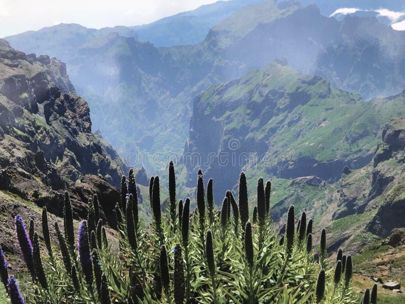 Мадейра стоковая фотография