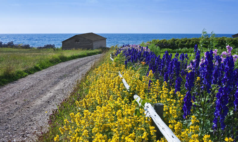 Майна с цветками, ловушками омара, Ньюфаундлендом стоковое фото rf