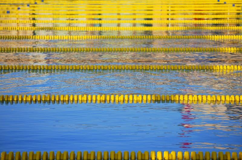 майны складывают участвовать в гонке вместе заплывание стоковая фотография