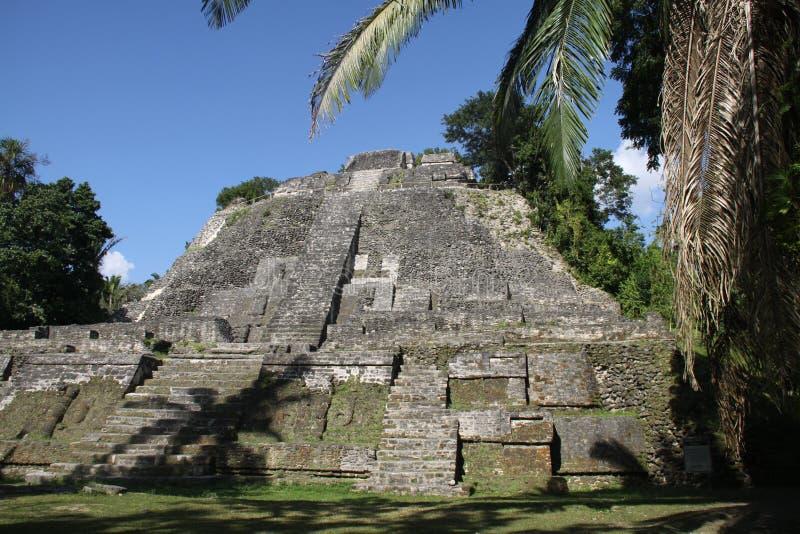 Майяская пирамида в городке Lamanai стоковое фото rf