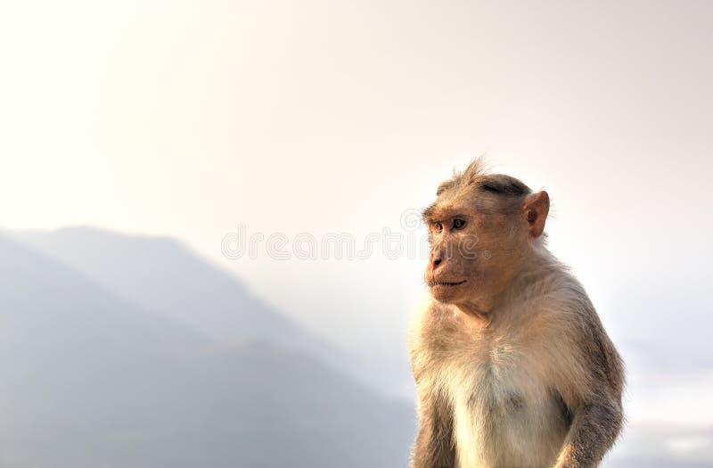 Макака Bonnet, Индия стоковое фото
