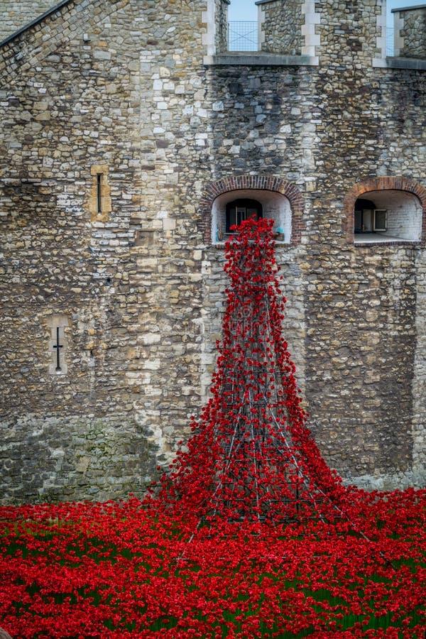 Маки на башне Лондона стоковые фотографии rf