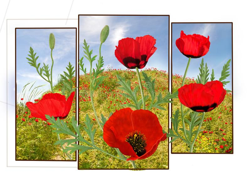 Poppies with the sky stock images