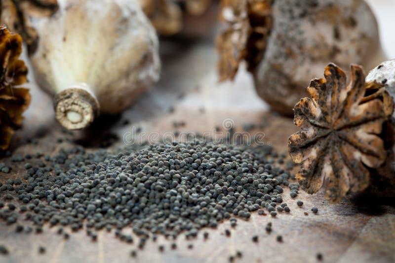 Маковые семенена и seedpods стоковая фотография