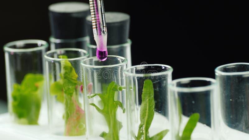 Макросъемка тестовых трубок с растениями, добавляют лекарство Концепция генетических модификаций стоковая фотография rf
