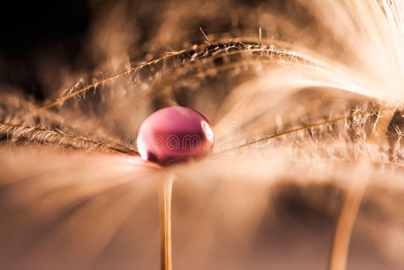 Макрос, абстрактный состав с красочной водой падает на семена одуванчика стоковые изображения rf