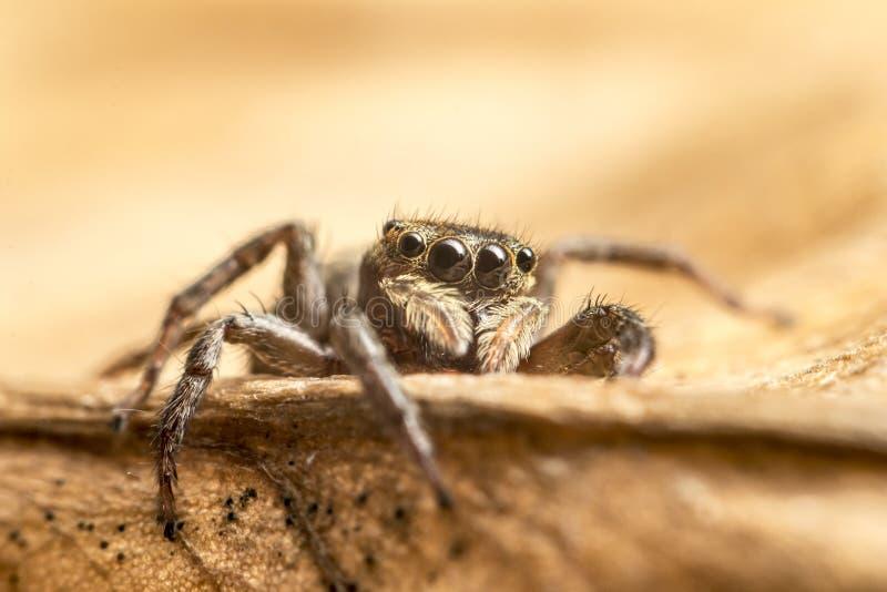 Макрос близкий вверх тропических пауков паукообразные в одичалом arachnophobia стоковые фото