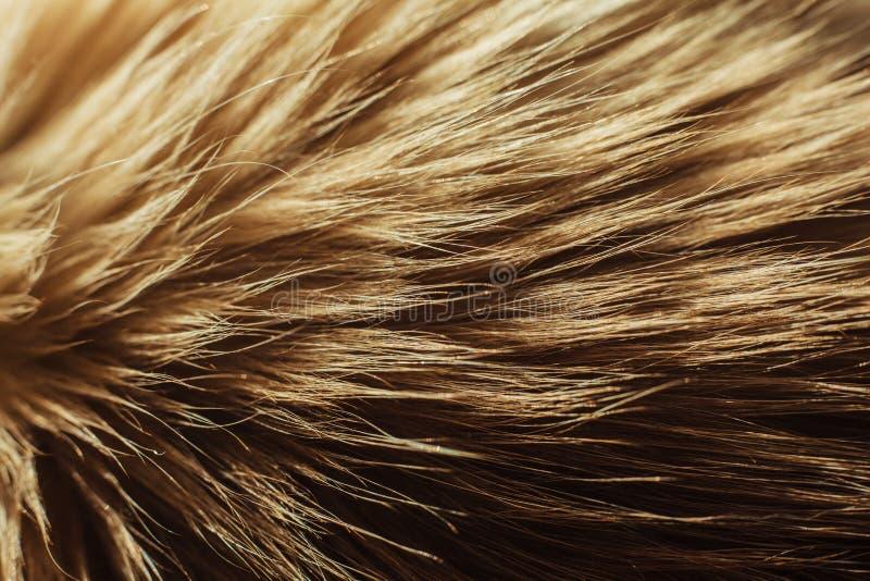 Download Макрос близкий вверх на мехе кота Стоковое Фото - изображение насчитывающей материал, текстура: 40576764
