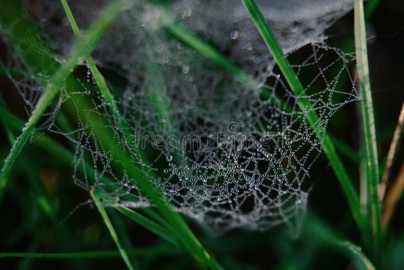 макрос, весна, паук, свежий, абстрактный, сеть стоковое изображение