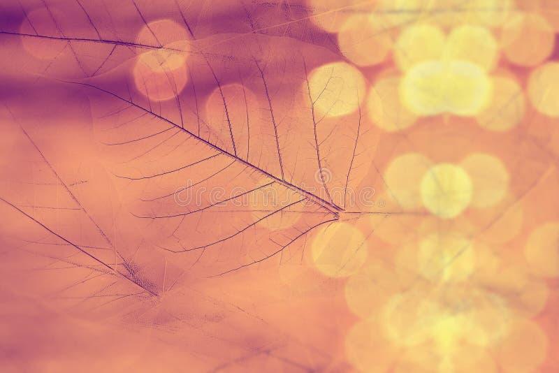 Макрос выходит текстура с ярким блеском или bokeh, винтажной предпосылкой стоковые изображения