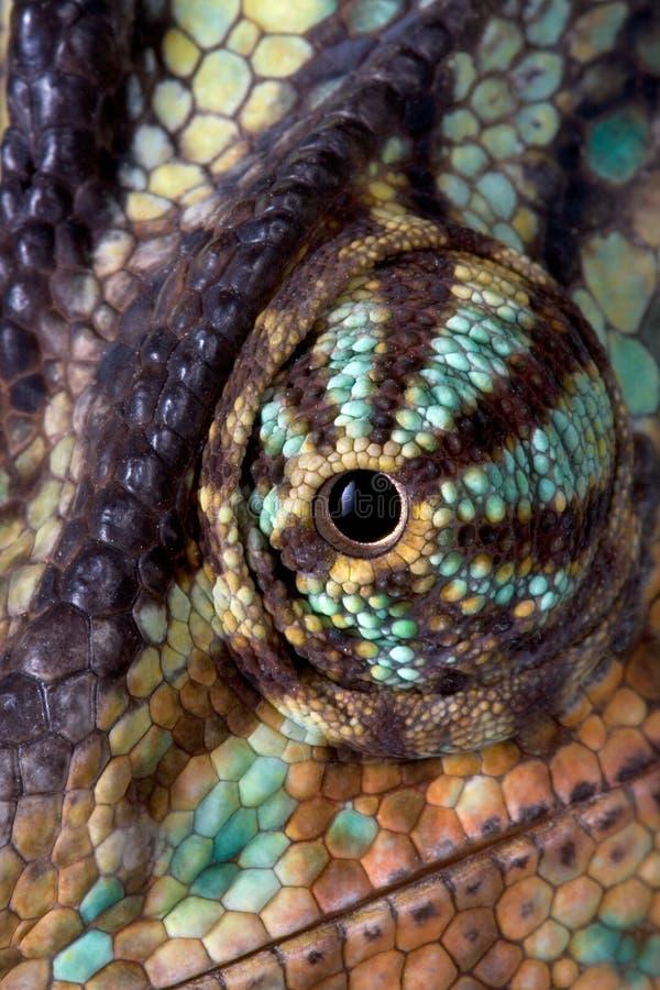 макрос глаза хамелеона стоковые изображения