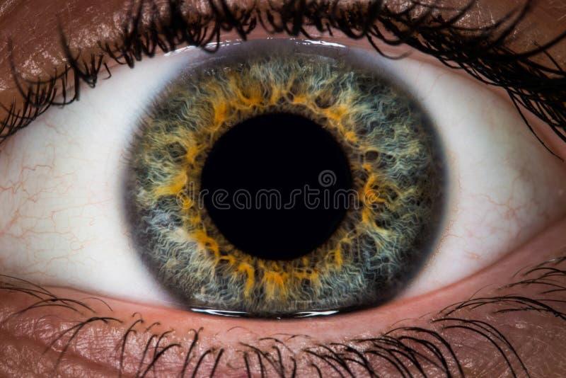 Макрос глаза стоковая фотография rf