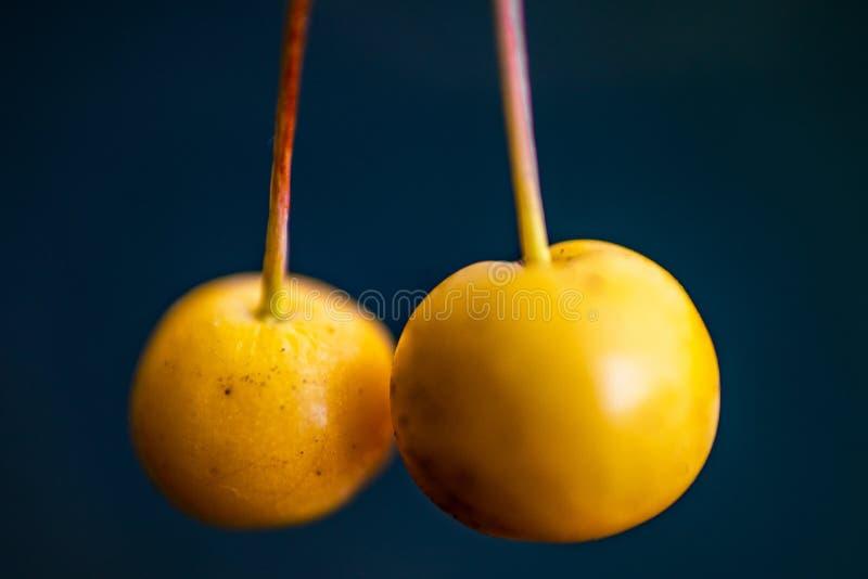 Макрос 2 желтых ягод изолированных против черной предпосылки стоковые изображения rf